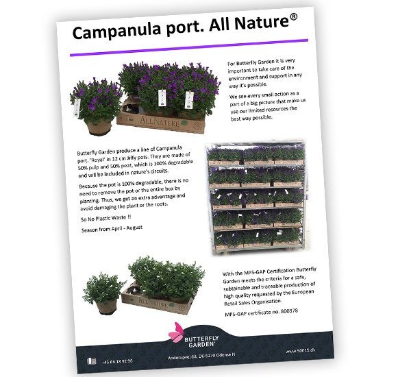 Campanula Royal all nature